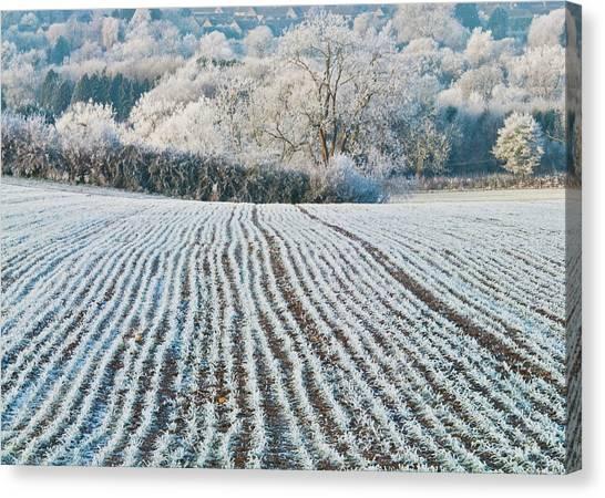 Winter Field, Little Rissington, Gloucestershire Canvas Print by David Ross