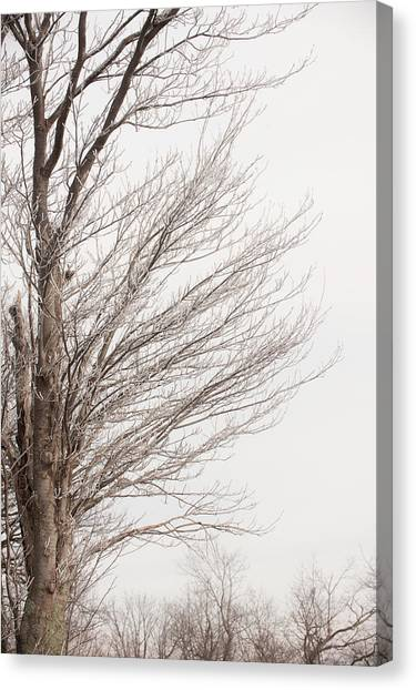 Winter Hoarfrost Canvas Print