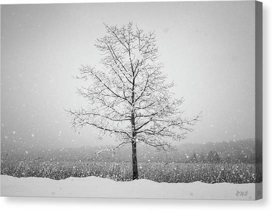 Canvas Print featuring the photograph Winter Landscape Vii Bw by David Gordon