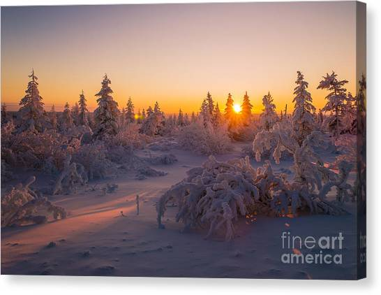 Arctic Wolf Canvas Print - Winter Landscape With Forest Trees by Oxana Gracheva