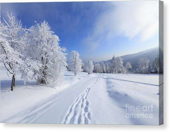 Hoarfrost Canvas Print - Winter Landscape With Snow by Bas Meelker