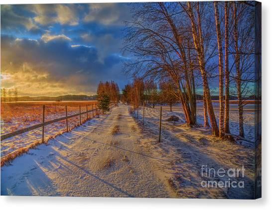 Birch Canvas Print - Winter Morning Light 6 by Veikko Suikkanen