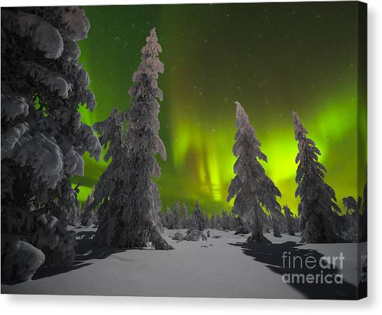 Arctic Wolf Canvas Print - Winter Night Landscape With Forest And by Oxana Gracheva