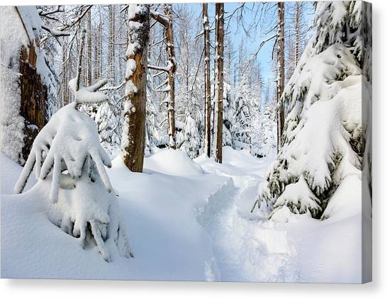 Canvas Print featuring the photograph winter path, Harz by Andreas Levi