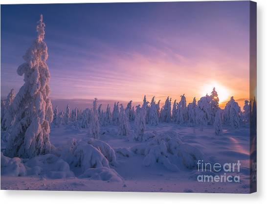 Arctic Wolf Canvas Print - Winter Snowscape With Forest, Trees And by Oxana Gracheva