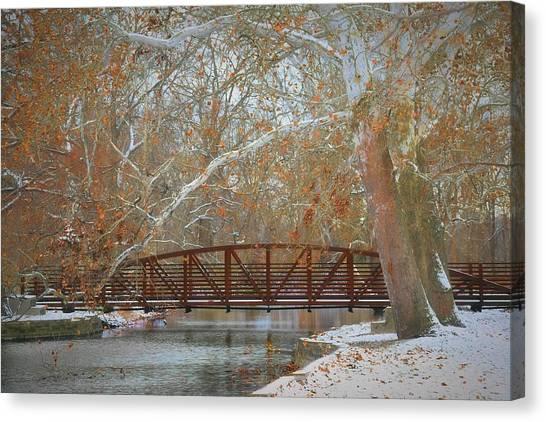 Winter Sycamores Canvas Print