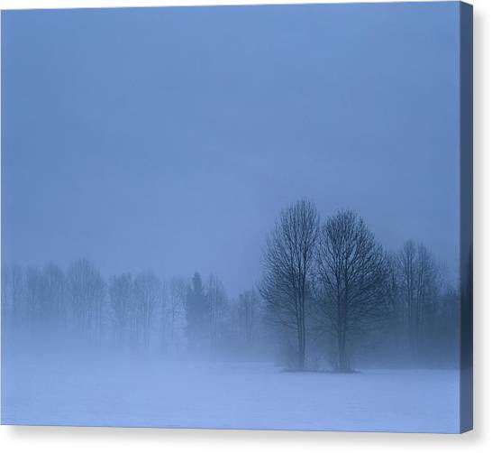Ljubljana Canvas Print - Winter Trees In Snowy Field With Low by Connie Coleman