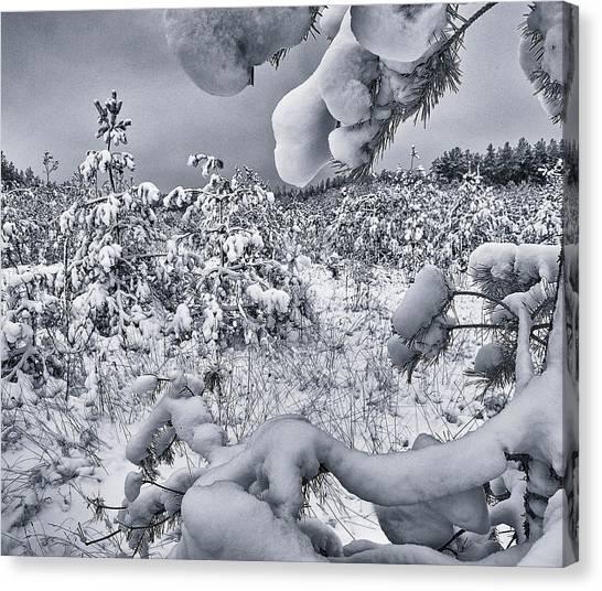 Winter Triumphs. Shchymel, 2018. Canvas Print