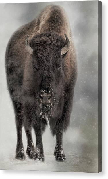 Winter Warrior Canvas Print