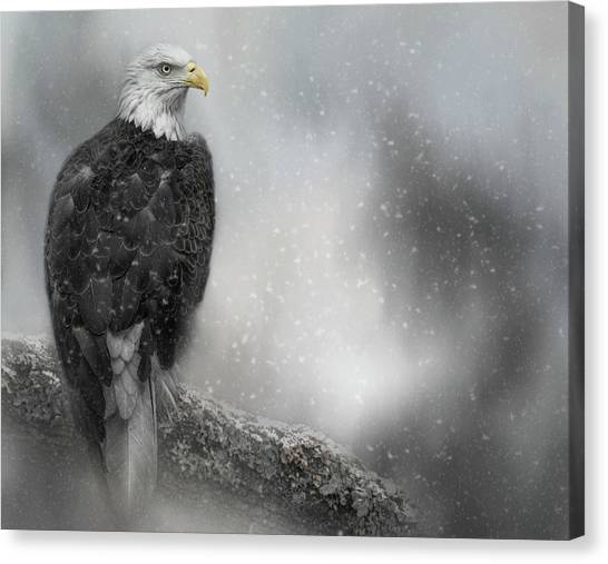 Winter Watcher Canvas Print