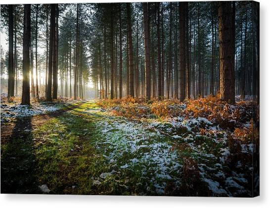 Nottinghamshire Canvas Print - Winter Woodland Sunset - Strawberry by Lee Warren Photography