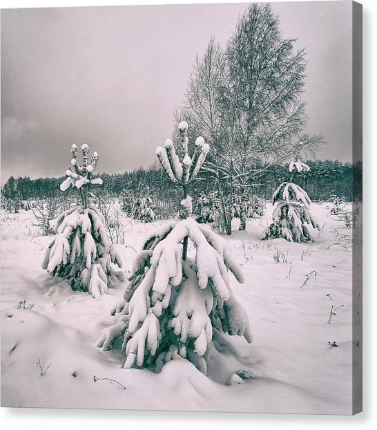 Winter's Coming. Horytsya, 2018. Canvas Print