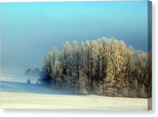 Winter's Heavy Frost Canvas Print