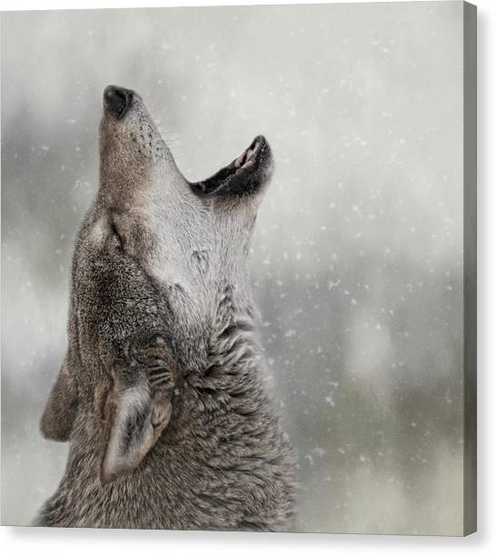 Catching Snowflakes  Canvas Print