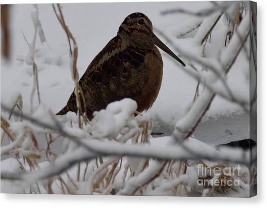 Woodcock Canvas Print - Wishing I Was Down On The Bayou by Randy Bodkins