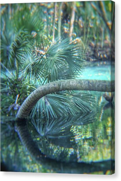 Witnessing Nature Canvas Print