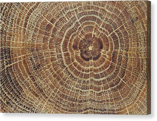 Wood Cross-section Background Canvas Print