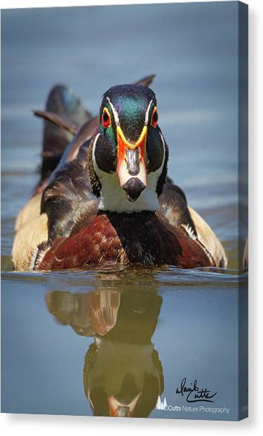 Wood Duck Face First Canvas Print