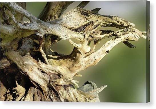 Canvas Print featuring the photograph Wood Log In Nature No.14 by Juan Contreras