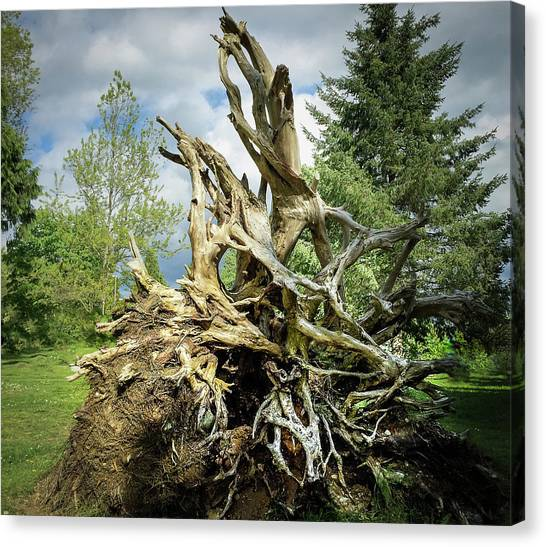 Canvas Print featuring the photograph Wood Log In Nature No.6  by Juan Contreras