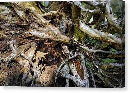 Canvas Print featuring the photograph Wood Log In Nature No.8 by Juan Contreras