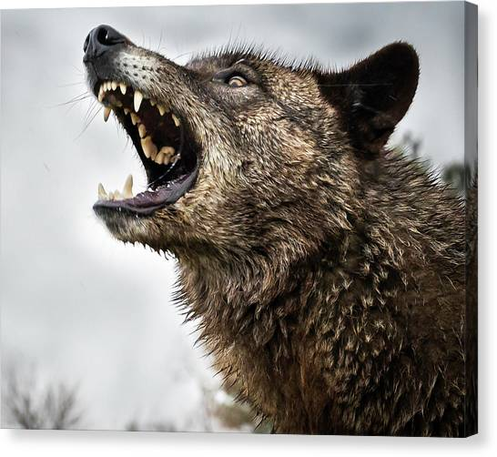 Woof Wolf Canvas Print