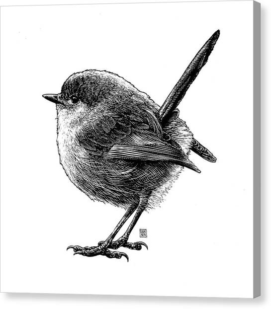 Canvas Print featuring the drawing Wren by Clint Hansen