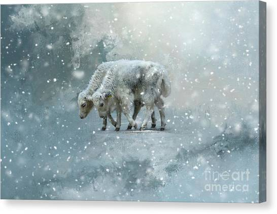 Yaks Calves In A Snowstorm Canvas Print