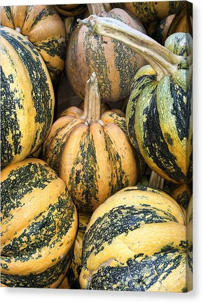 Yellow And Green Pumpkins Canvas Print