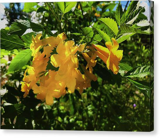 Yellow Trumpet Canvas Print - Yellow Bells - Sun And Shade by Robert J Sadler