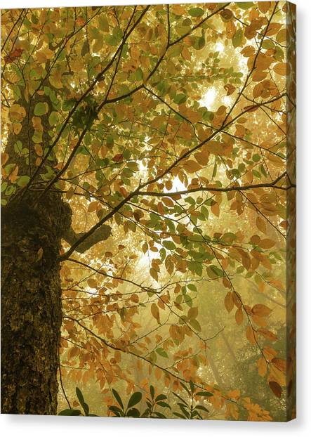 Yellow Fall Leaves - Blue Ridge Parkway Canvas Print
