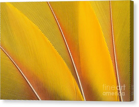 Happiness Canvas Print - Yellow Feathers Background Composition by Mustafanc