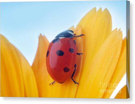 Zoology Canvas Print - Yellow Flower Petal With Ladybug Under by Anatoly Tiplyashin