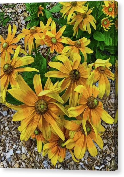 Yellow In Bloom Canvas Print