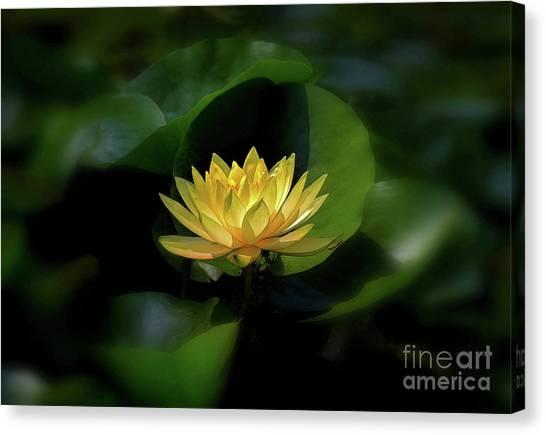 Canvas Print featuring the photograph Yellow Lotus by Patti Whitten