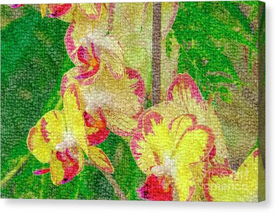 Yellow/rouge Orchids Canvas Print