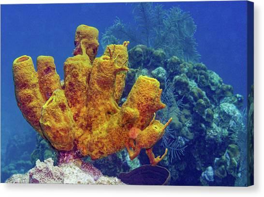 2779ba24ffca Sea Sponges Canvas Prints (Page #20 of 23) | Fine Art America