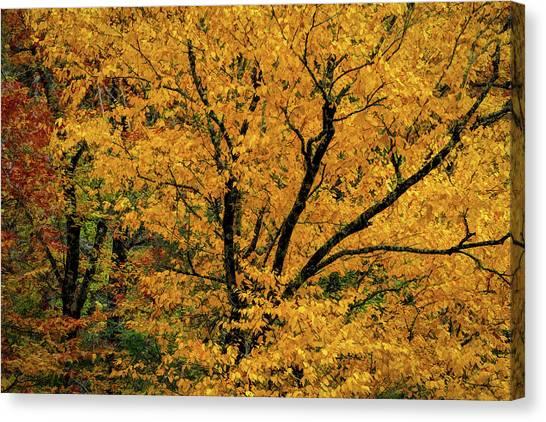 Yellow Tree Leaf Brilliance  Canvas Print