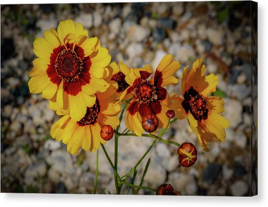 Yellow Wildflowers Canvas Print