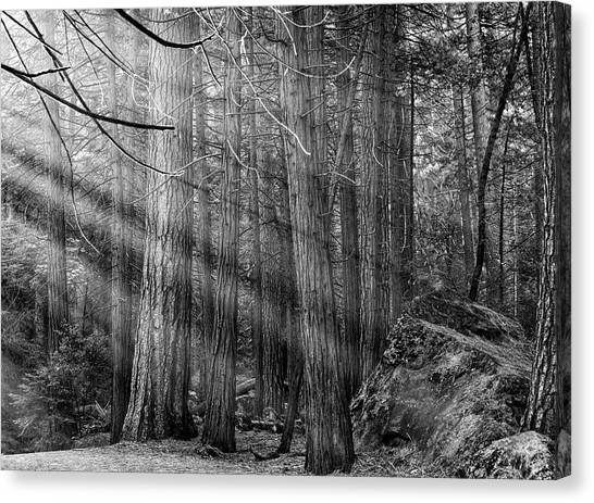 Canvas Print featuring the photograph Yosemite Sunbeams by Rand