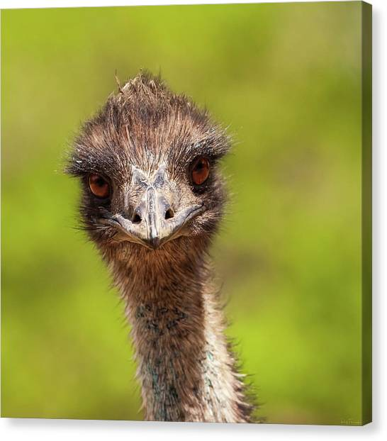 Canvas Print featuring the photograph You Are Getting Sleepy by Rick Furmanek