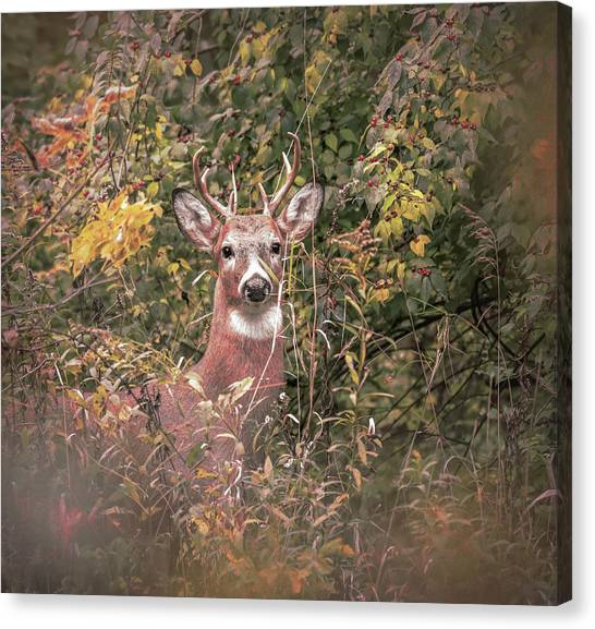 Canvas Print featuring the photograph Young Buck Portrait by Dan Sproul