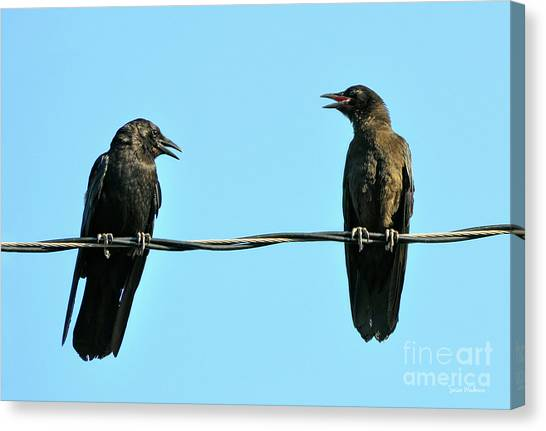 Young Crow Chatting With Mom Canvas Print