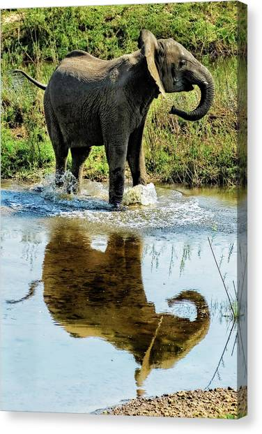 Young Elephant Playing In A Puddle Canvas Print