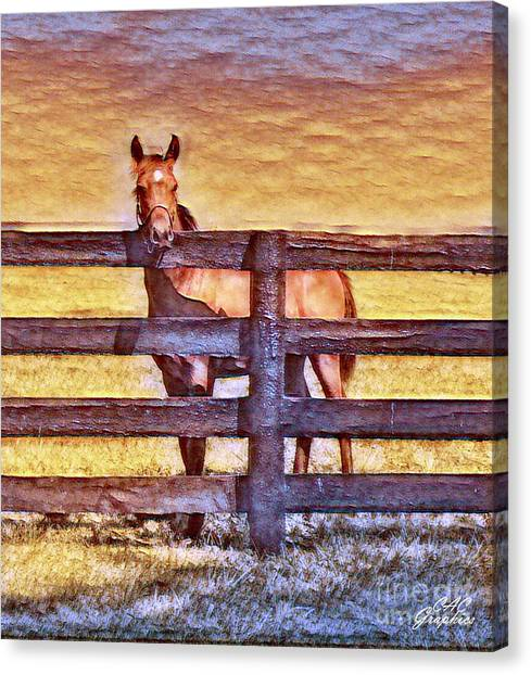 Young Kentucky Thoroughbred Canvas Print