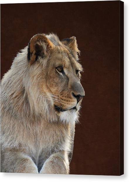 Young Male Lion Portrait Canvas Print