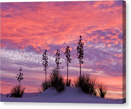 Yucca At Sunset In White Sands National Canvas Print by Russell Burden