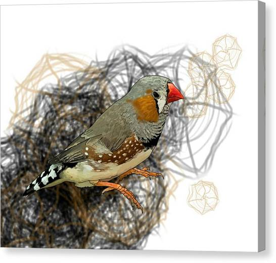 Canvas Print - Z Is For Zebra Finch by Joan Stratton