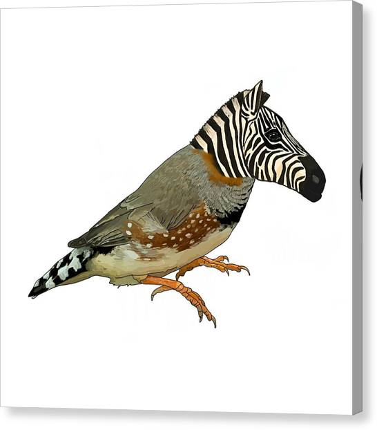 Canvas Print - Z Is For Zebra Finch Thats Not A Zebra Finch by Joan Stratton