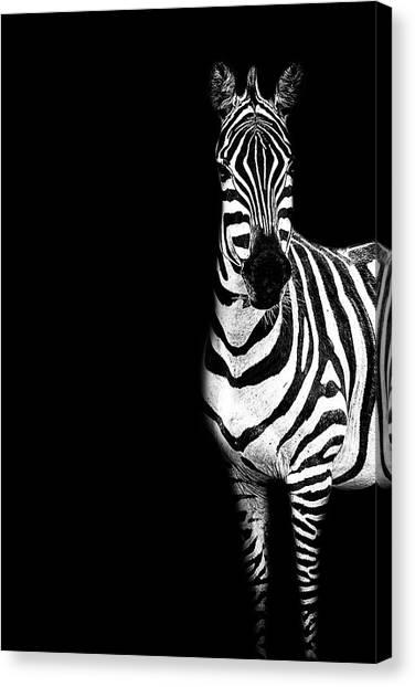 Zebra Drama Canvas Print